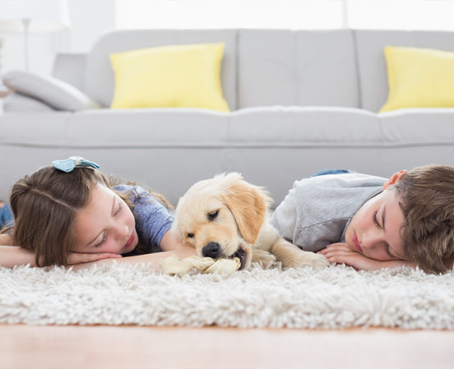 Gainesville Professional Steam Carpet Cleaning