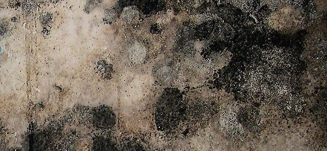 Mold company gainesville